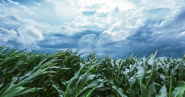 The Role of Weather—and Weather Forecasting—in Agriculture - DTN