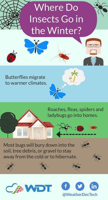 insects in winter infographic 1-19-18