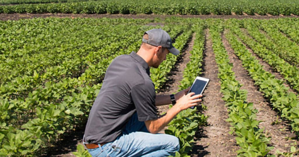 agronomist in soybean field with tablet