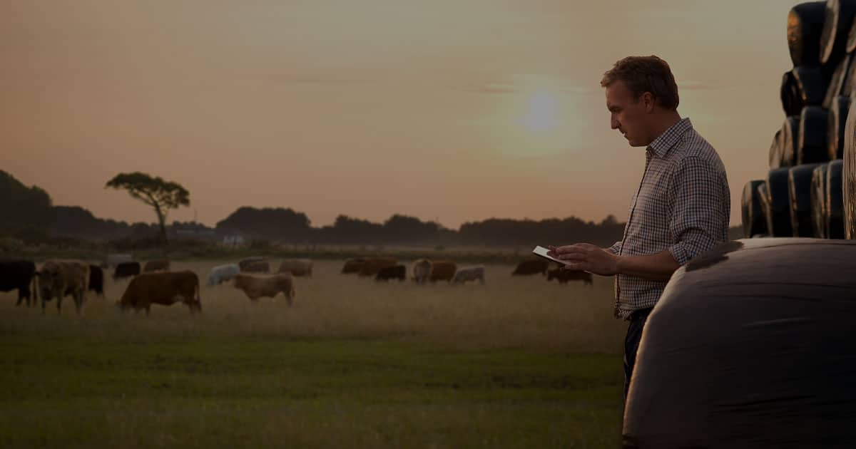 farmer with ipad leaning on hay bales in livestock field