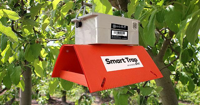orange dtn smart trap in trees