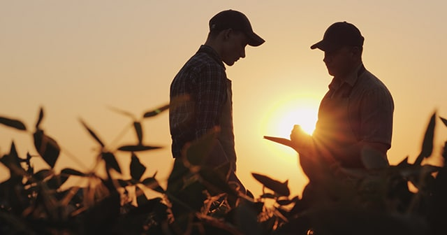Farmers in field with tablet at sunset