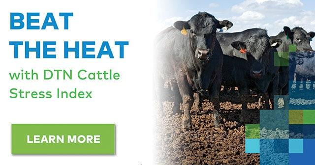 beat the heat cattle stress index news header