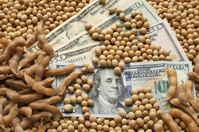 Soybeans and money