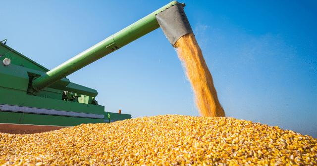 Corn-Commodity-Markets