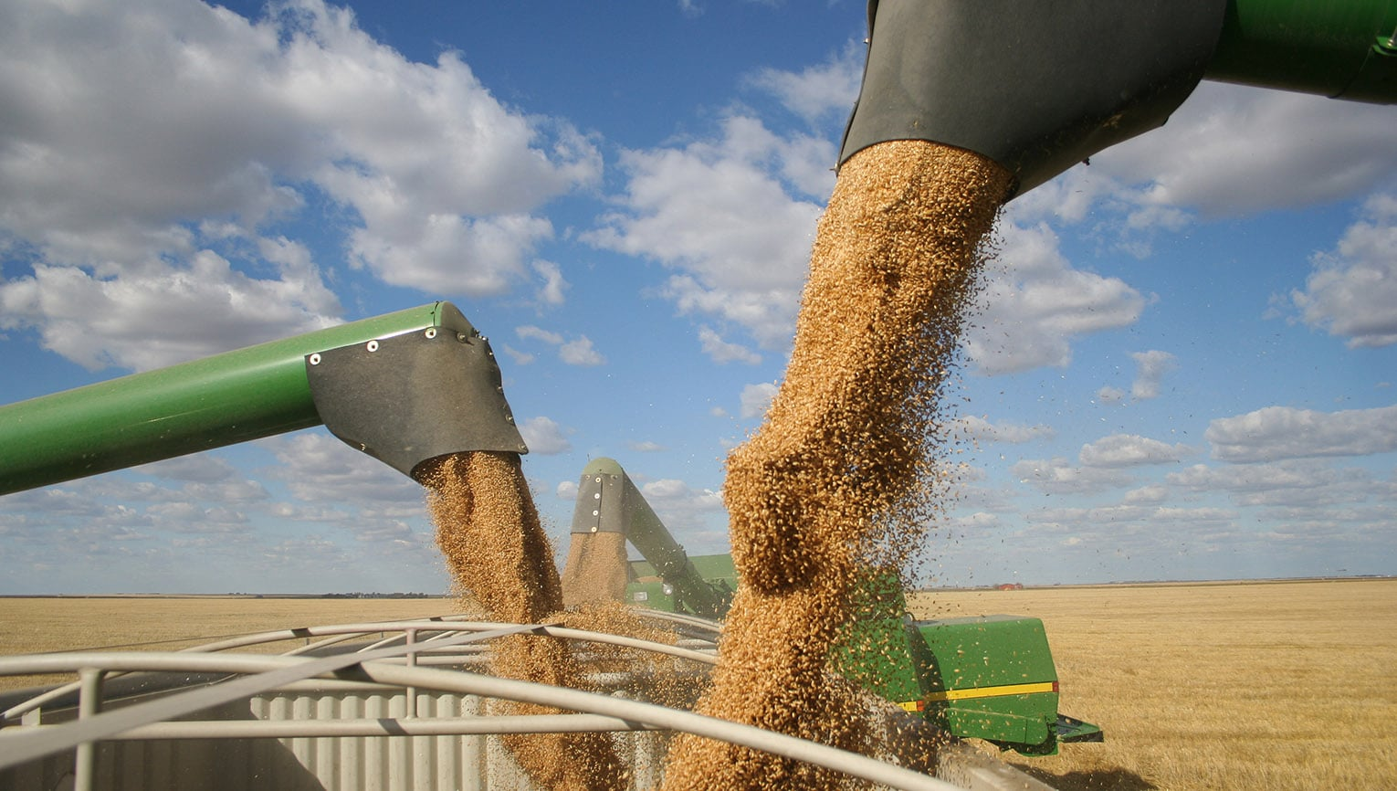 combines pouring grain into hopper