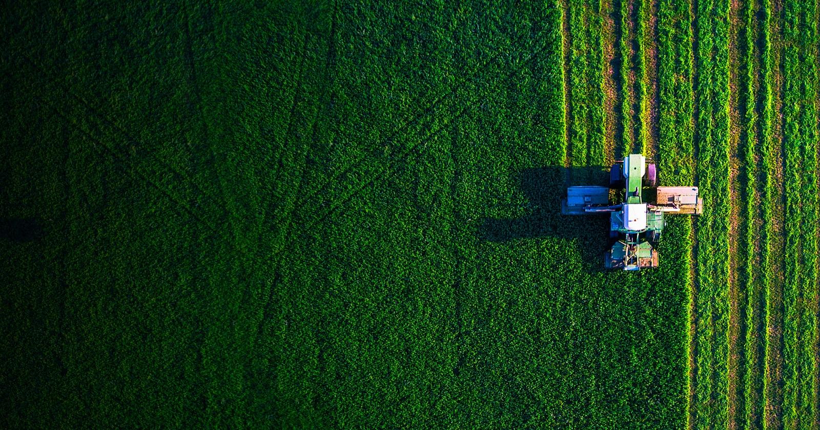 farmers in green field