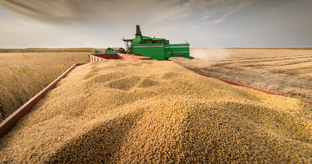 grain-bid-soybeans