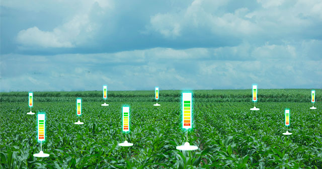 corn crop cloudy sky with digital spot gauges