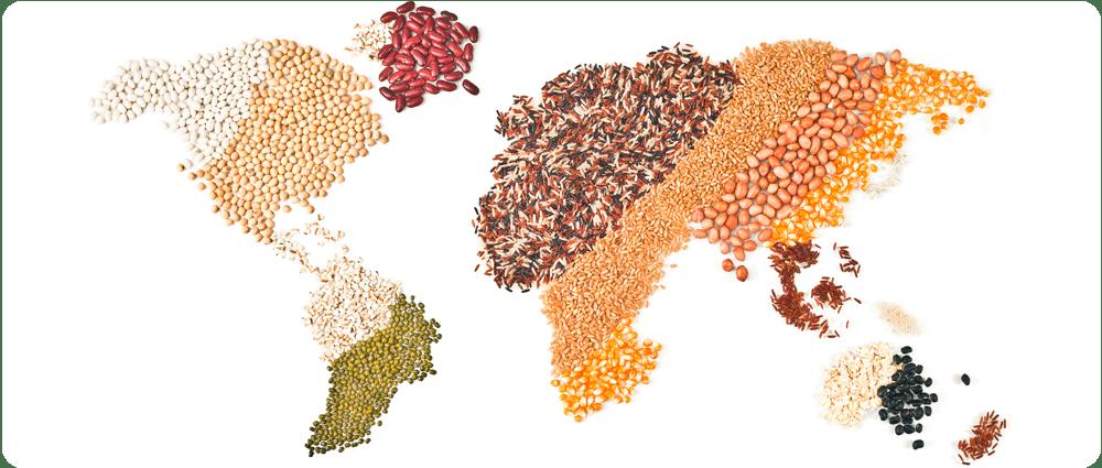 World of Grains