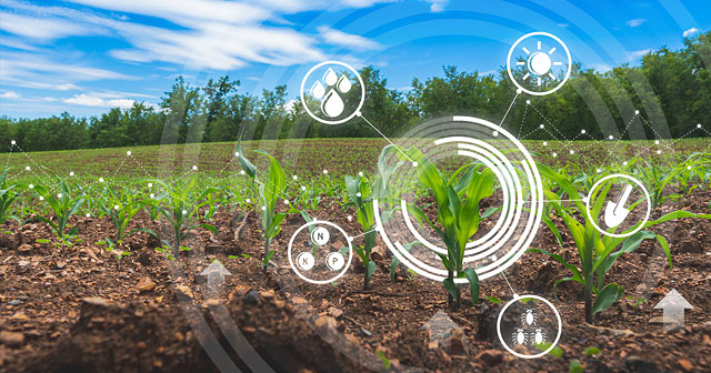 young corn crop soil quality digital callout