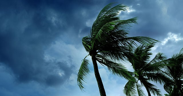 Blog Header Palm tree blowing in the wind