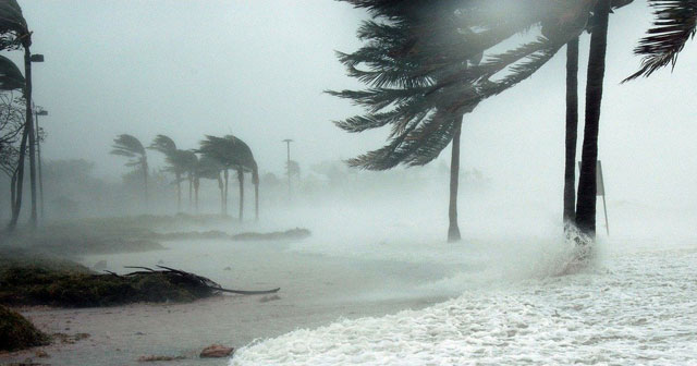 News Insights Hurricane blowing palm trees