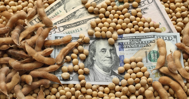 Blog header Money in Soybeans