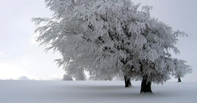 News Insights Frozen Tree