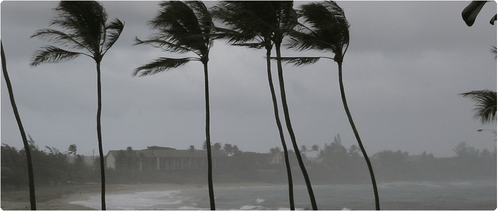 Palm trees blowing in storm in front of resort