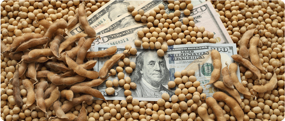 Money covered in soybeans