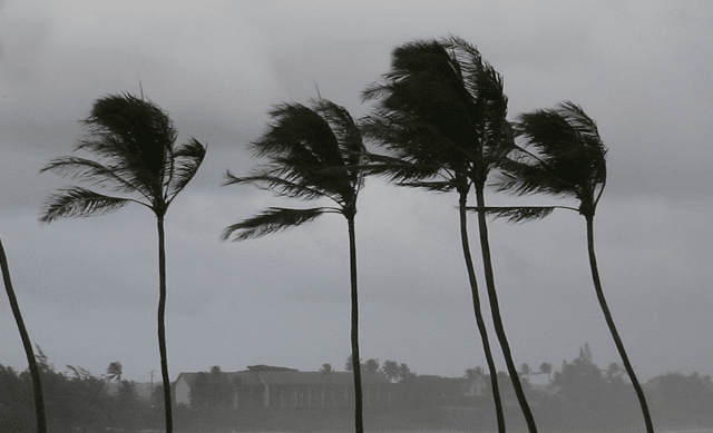 Palm trees blowing in windy storm