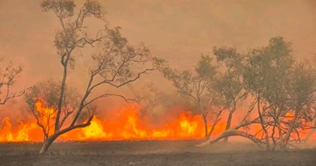 News Insights Trees Burning
