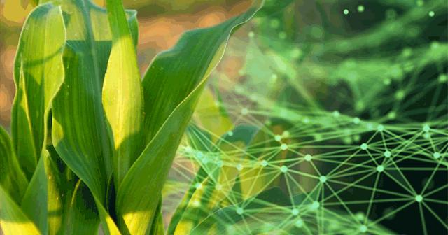 Blog Header Corn data points
