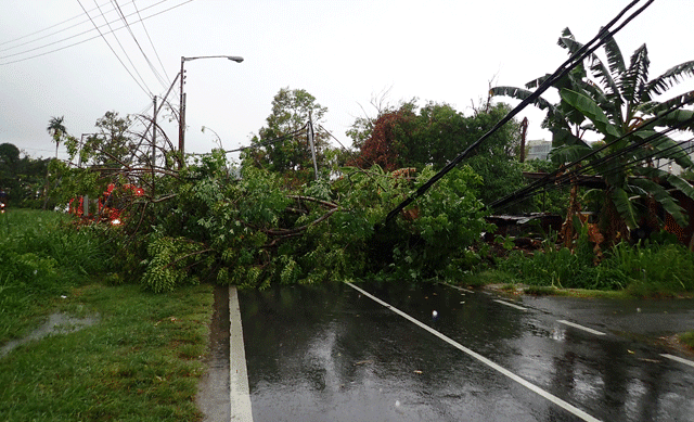 Power lines down from tropical storm