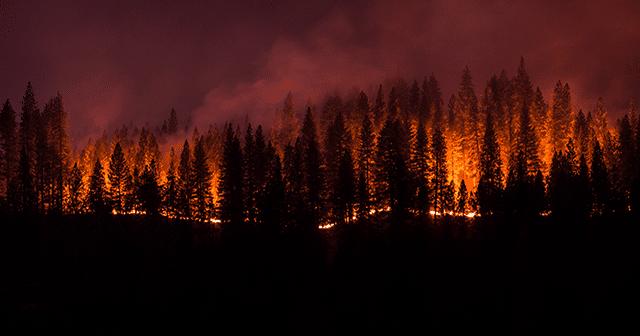 Wildfire Blog Header