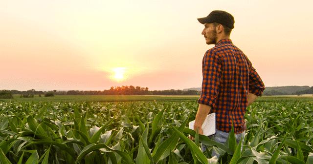 News Insights Farmer standing in cornfield